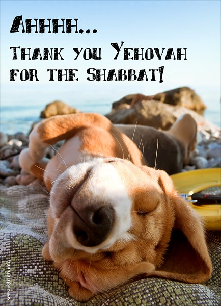 puppy shabbat Ahhhh… Thank you Yehovah for the Shabbat!